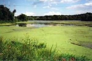 Solution For Algae Blooms