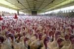 Cargill: Only Using Antibiotics To Treat Ill Livestock