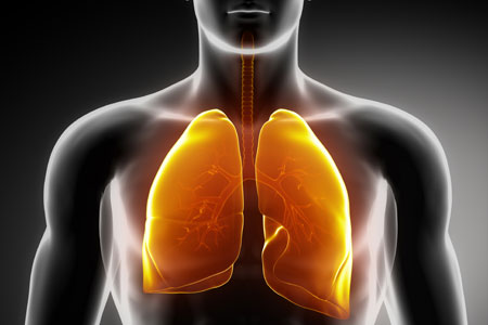 Researchers Grow Human Lung In A Lab