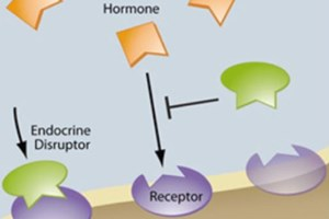 Endocrine Disrupting Compounds And Their Treatment