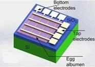 Dissolvable Circuitry For Medical Devices Developed From Egg Whites