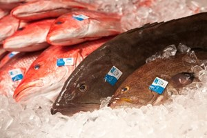 An Important Step Toward Improving Seafood Traceability