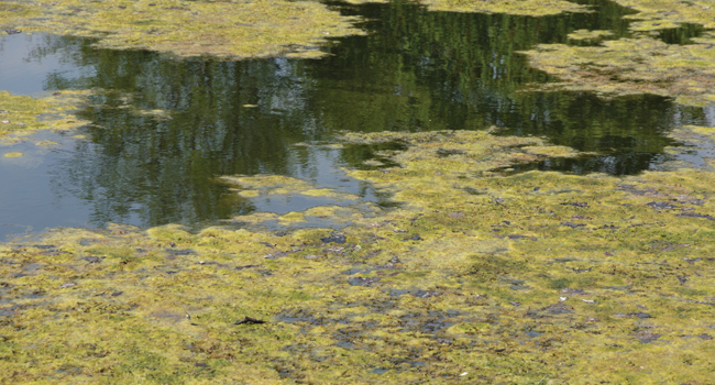 Poison In The Water: How To Defeat Toxic Algae