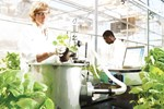 Medicago's Innovative Vaccine Production Using Tobacco Plants