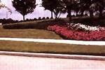 Turfgrass