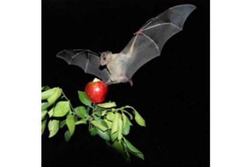 How Bats Recognize Their Own 'Bat Signals'