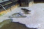 The Cost Of Spilled Milk: Analyzing Product Loss In The Dairy Industry