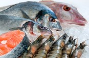 Presidential Task Force Seeks Public Commentary On Seafood Safety
