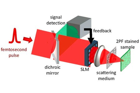 Optical Imaging Through Opaque Layers