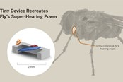 Developing Fly-Inspired, Piezoelectric Hearing Aids