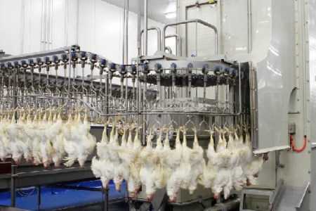 The Poultry Industry Is Speaking Highly Of New, Stricter USDA Standards