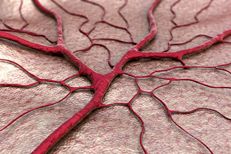 Researchers Develop New Material To Make Artificial Blood Vessels
