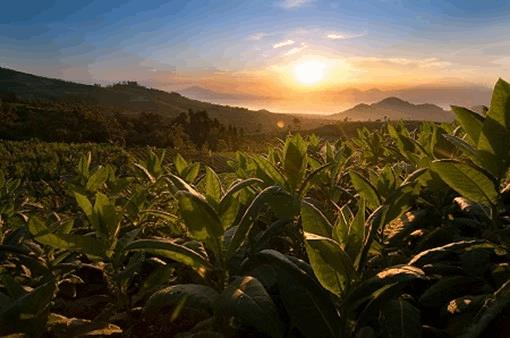 """Growing"" Biosimilars: How Plants Bolster Manufacturing Efficiency"