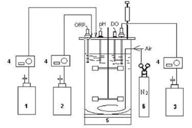 Anaerobic Yeast Fermentation For The Production Of Ethanol In A New Brunswick BioFlo 310 Fermentor