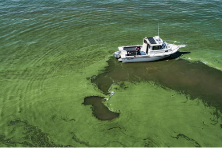 NOAA Awards $10.2M For Harmful Algal Bloom Research - Water Online