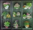 Floral Refrigeration