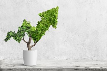 Tree-growth-increase-iStock-924834270