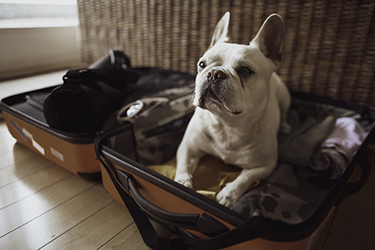 Dog Suitcase Events