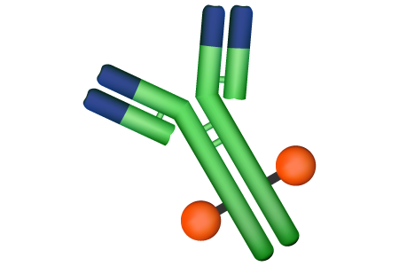 Antibody Drug Conjugates (ADCs) - Linker and Conjugation
