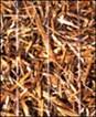 AEC Premier Straw