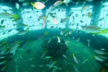 fish_inside_riser_1.jpg