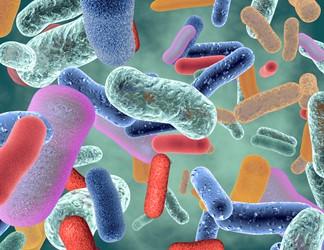 Bacteria Bio Under Microscope