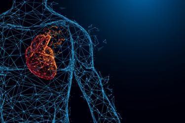 human-heart-cardiac