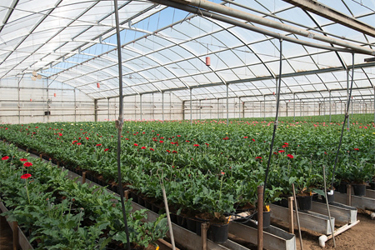 A hydroponic greenhouse. USDA photo by Lance Cheung