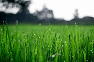 How WWTP's Can Get Greener Grass On The Other Side Of The IIoT