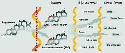 estrogenic steroids