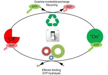 molecular-switches