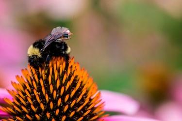 washington-bee