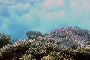 USGS_reef