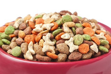 Dog Food Close Up