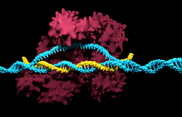 Beyond CRISPR: Choosing The Right Gene Modification Technology For Mouse Model Generation