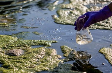 algaesample