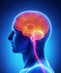 Good Money No Longer Goes To Die In Neuroscience