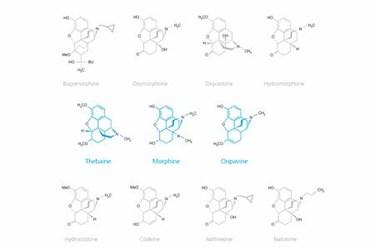 Portfolio API and Controlled Substance