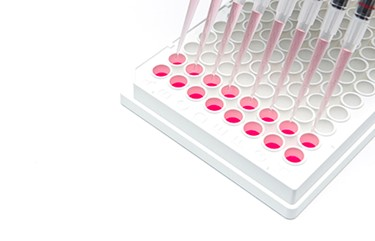 cell based assay