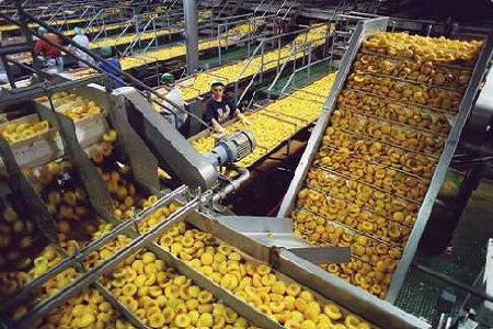 how to use technology in food processing