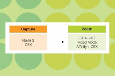 Development Of Non-Affinity Based Purification Platform For Neutral/Basic IgMs