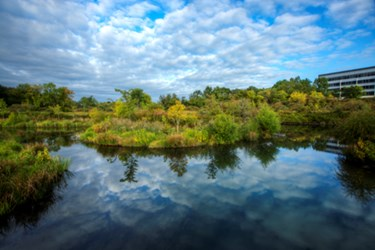 Stormwater Wetland Reduces Sewer Overflow By 84 Percent