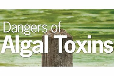 The Dangers Of Algal Toxins