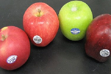 Texture Analysis Of Apples