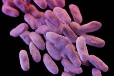 cre-superbug