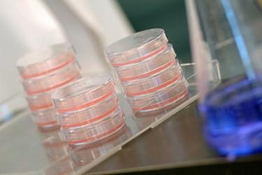 Petri dish bio cells