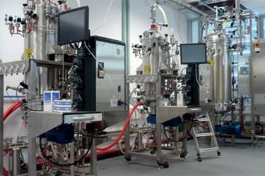 Optimization Of Bacillus sacchari Fermentation And Scale Up