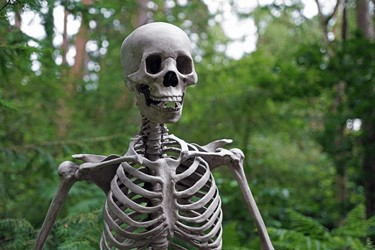 Skeletal Wonder From Down Under