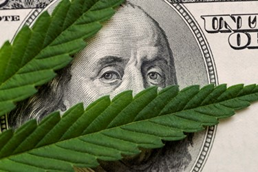 marijuana cannabis dollar background