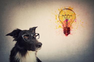 Dog Thinking Light Bulb
